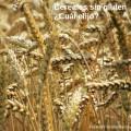 cereales-sin-gluten